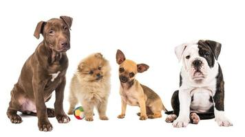 Litter of different puppy dog