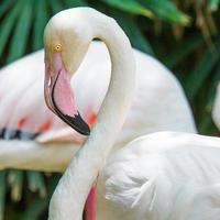 Flamingo bird. photo