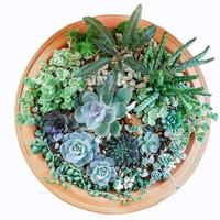 Succulent Pot on white background