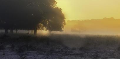 Deer Scenic photo