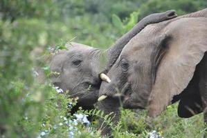 elefantes foto