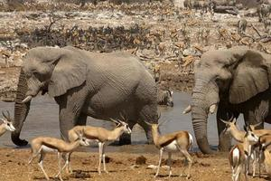 pozo de agua de okaukuejo, parque nacional de etosha, namibia foto