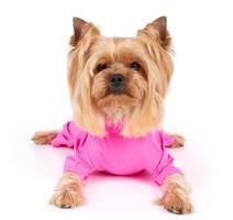 Dog in pink overalls