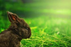 Little black bunny on evening Sunlight