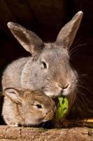 pequeño conejo con mamá foto