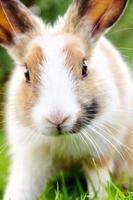 lindo conejito en la hierba foto