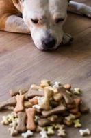 Dog with treats photo