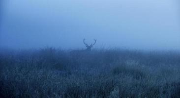 Deer stag silhouette! photo