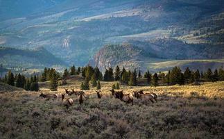 Traveling Elk
