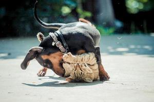 Hund Katze Spiel photo