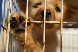 rescate de perros foto