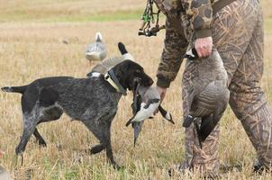 Goose Hunting photo