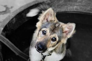 cachorro domestico foto