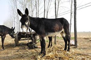 The donkey photo