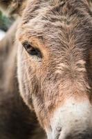 Donkey head - close-up photo