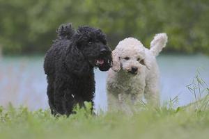 perros foto