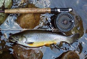 Golden Brook Trout photo