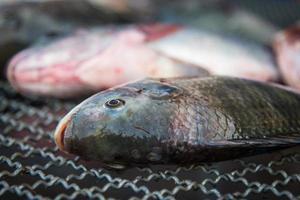 pescado foto