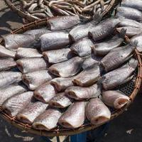 Dried fishs