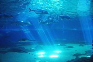 vida marina tropical foto