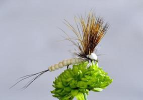 mosca de trucha alada seca foto