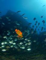 escuela de peces