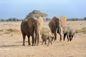 éléphant dans le parc national du kenya