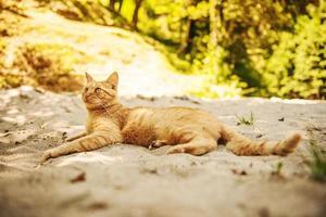 kat liggend in het zand