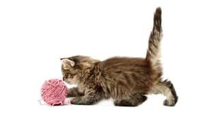 kitten playing with pink ball