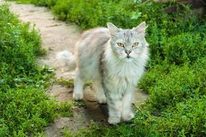 gato foto