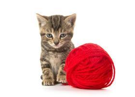 Cute tabby kitten photo