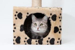 grijze kat in kattenhuis geïsoleerd