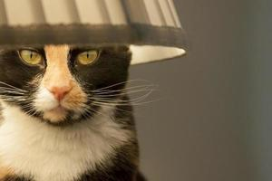 Calico cat wearing a lampshade