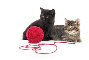Two cute kittens and red yarn