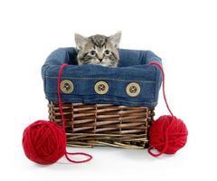 Tabby kitten in a basket