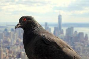 Pigeon and NYC photo