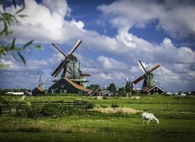 Windmills on Farm in Netherlands