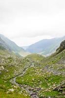 ovelhas na área de alta montanha de transfagarasan, romênia