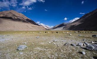 Herd of sheep against the background of distant colorful mountai photo