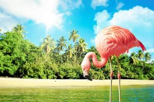 Pink flamingo in the water on a tropical scenery photo