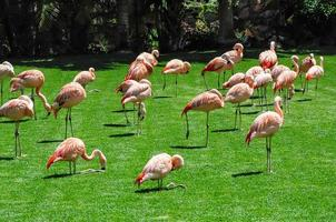 Group of flamingos on green grass