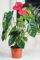 flor de flamenco