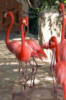 pink flamingo at Mexican zoo