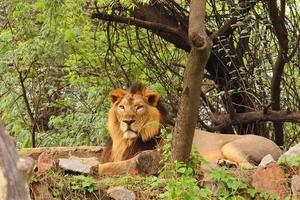 león foto