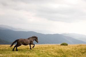 Black stallion photo