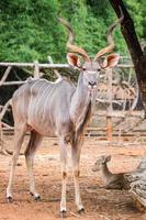 antelope photo