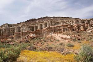 Antelope Valley Poppy Reserve, Californië, VS.