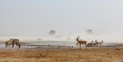 Nxai Pan NP dusty waterhole photo