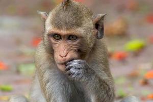 monos comiendo foto