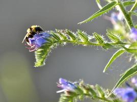 abeja en vuelo foto